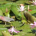 Protecting Nature Must Be At The Heart of Caribbean COVID-19 Recovery: CANARI