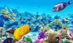 Coral Reefs in  Barbados and Beyond