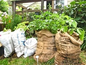 Garden-in-a-Sack: Benefits and How to Build Your Own