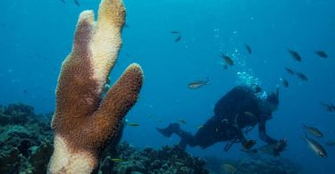 Deadly Coral Disease in the Caribbean Linked to Ships' Wastewater